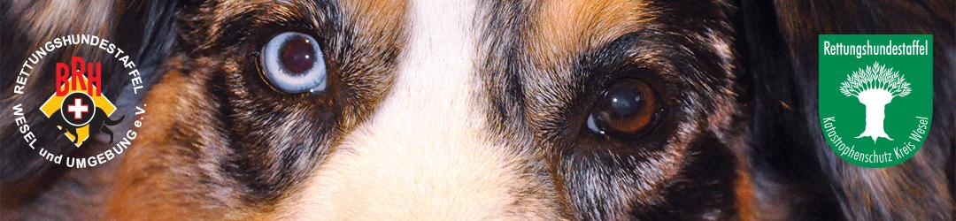 Rettungshundestaffel Wesel & Umgebung e.V.